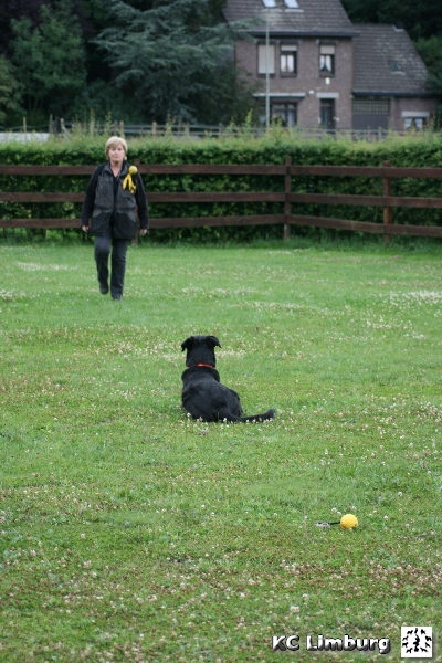 003 obedience cursus